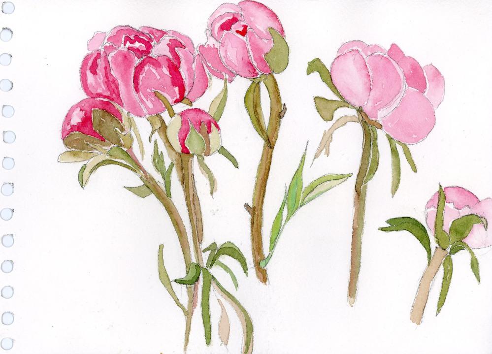 Blooming Peonies!!!!! (2/6)